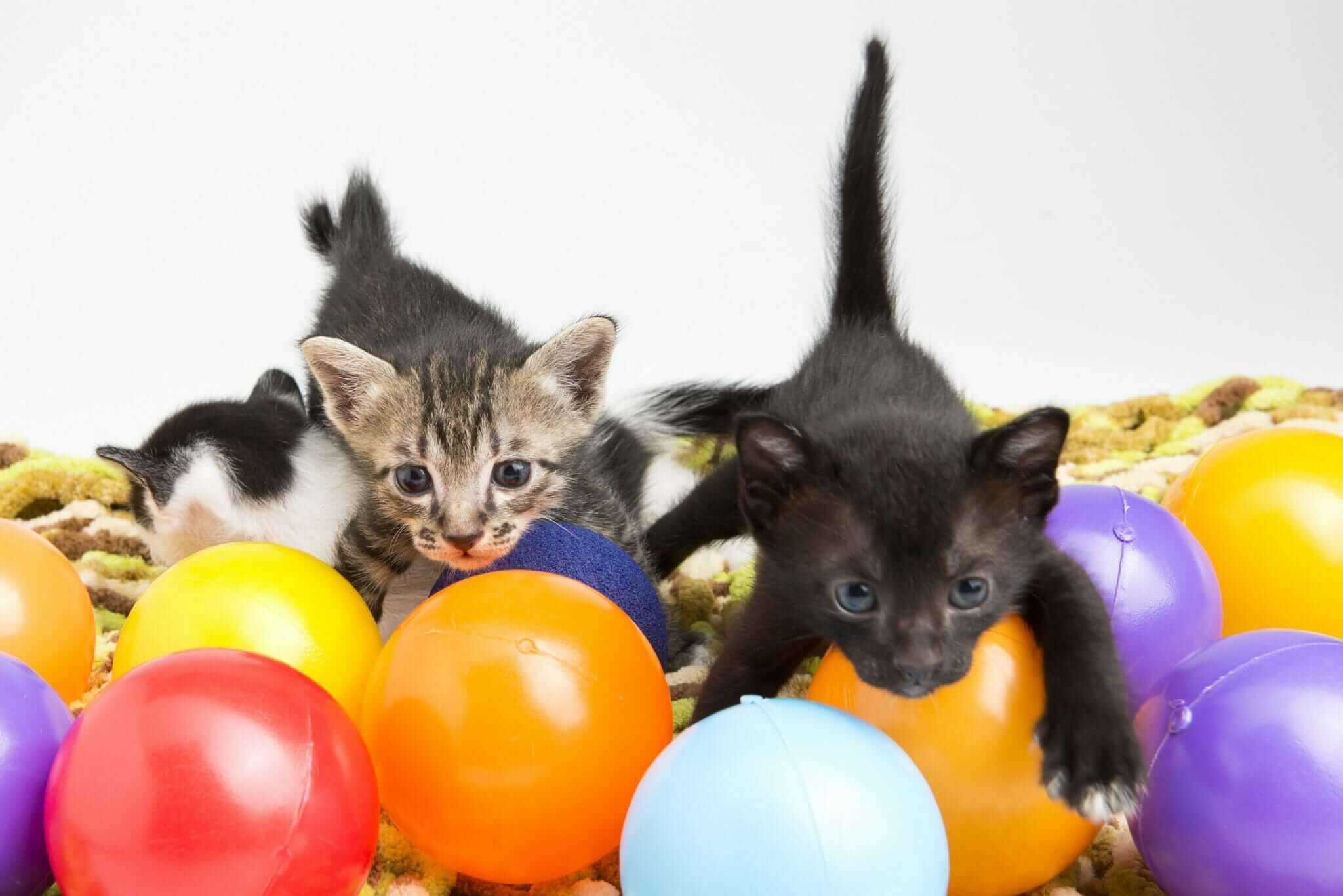 Choosing the Best Kitten Food for Your Kitten