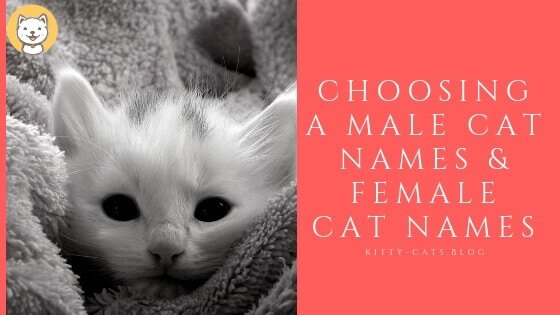 Choosing a Male Cat Names & Female Cat Names