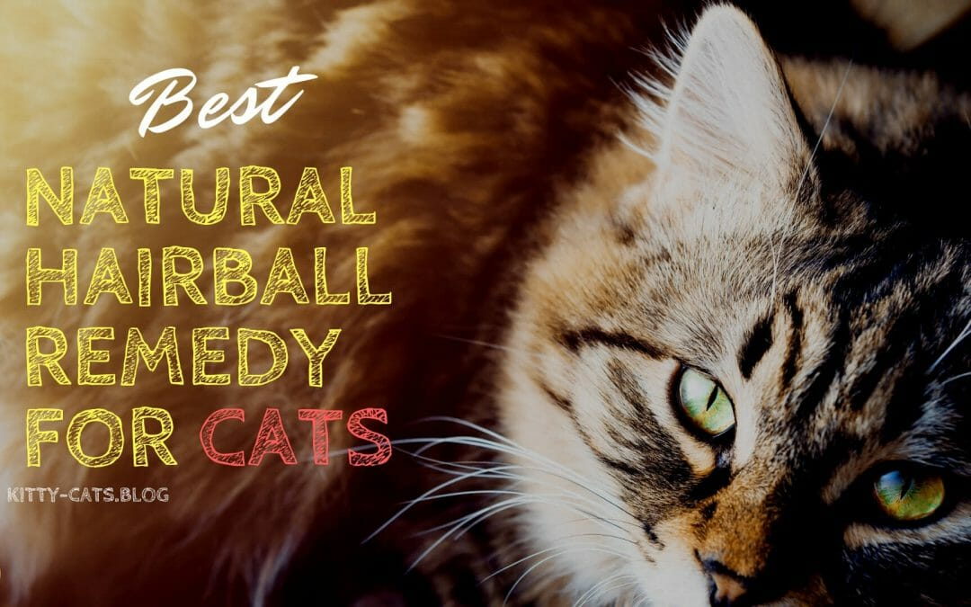 Best Natural Hairball Remedy for Cats