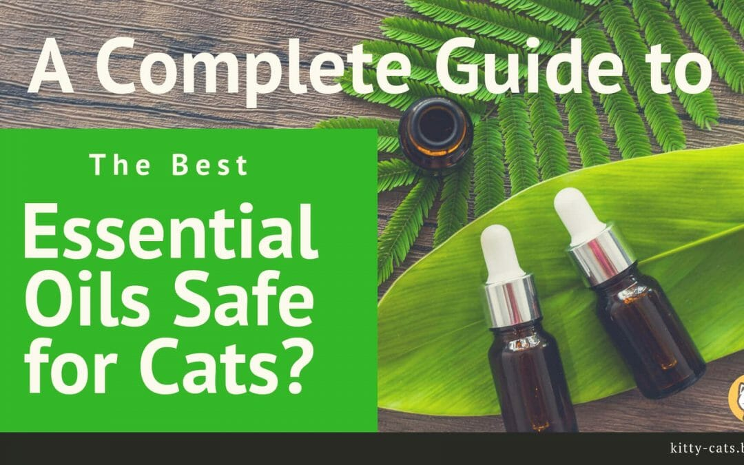A Complete Guide to The Best Essential Oils Safe for Cats