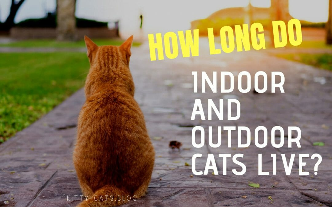 How Long Do Indoor and Outdoor Cats Live