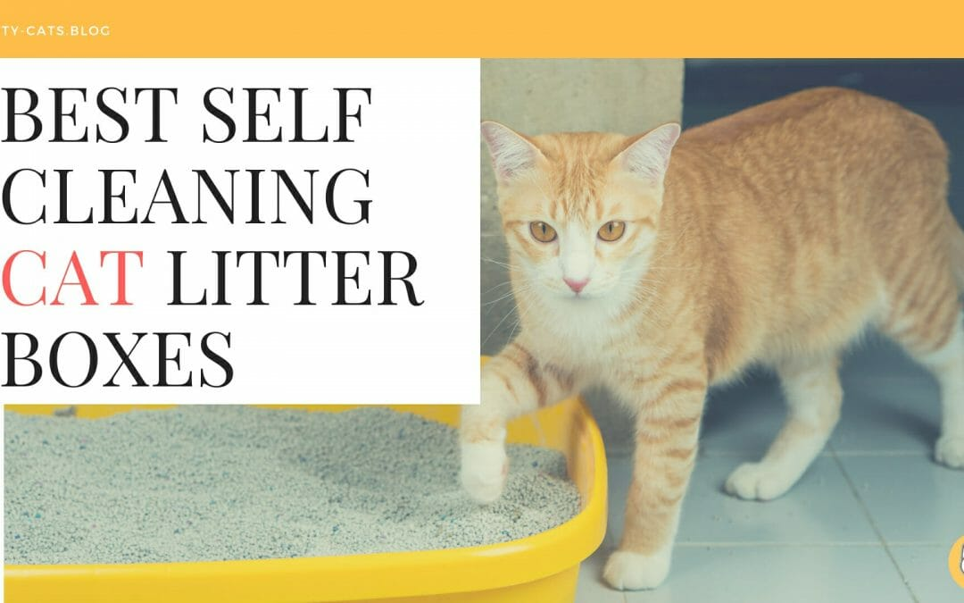 Best Self Cleaning Cat Litter Boxes