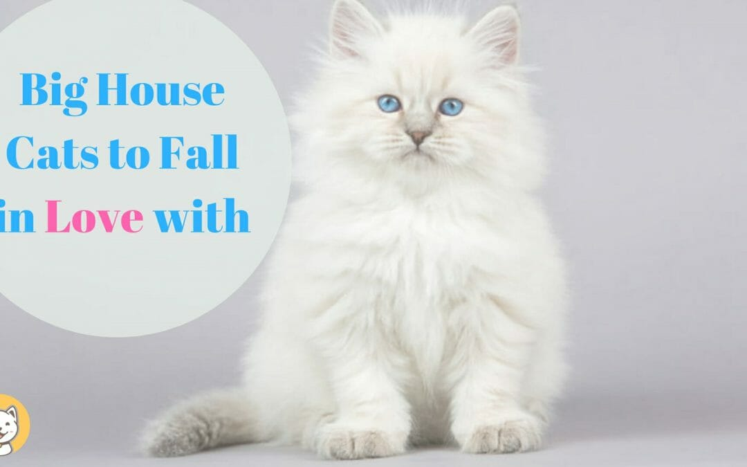 Big House Cats to Fall in Love with