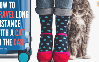How to Travel Long Distance with a Cat in the Car