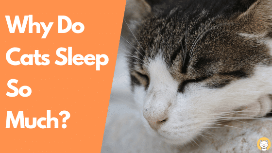 why do cats sleep so much