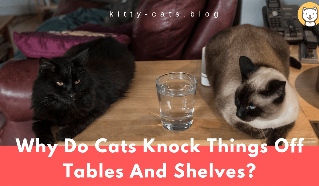 Why Do Cats Knock Things Off Tables And Shelves? – A Common Nuisance and What You Can Do