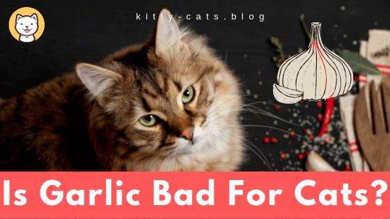 Is Garlic Bad For Cats?