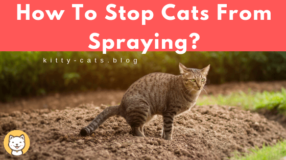 How To Stop Cats From Spraying?