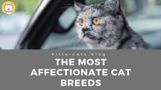 The Most Affectionate Cat Breeds