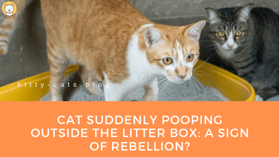 Cat Suddenly Pooping Outside The Litter Box: A Sign of Rebellion?