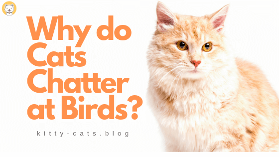 why do cats chatter