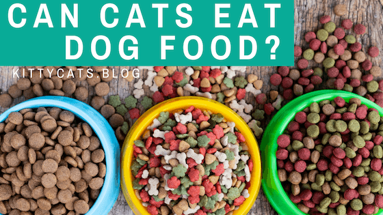Can cats eat dog food? – Behind the fact