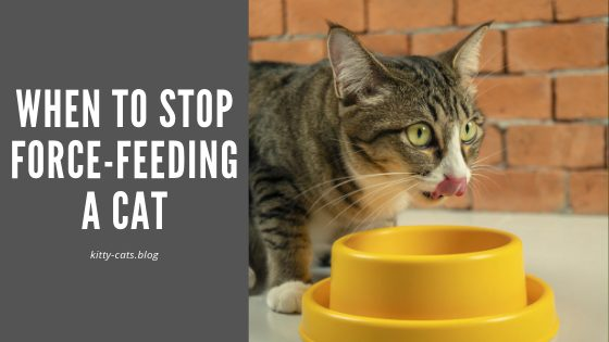 when to stop force feeding a cat