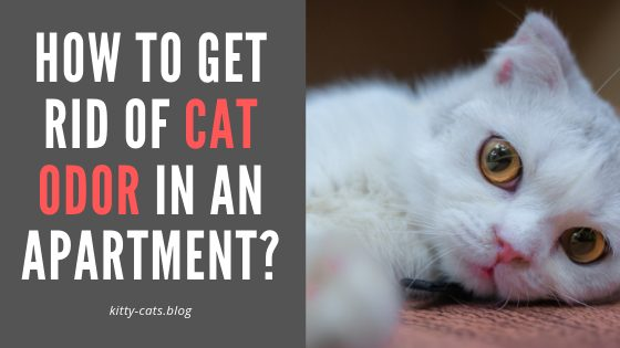 How To Get Rid Of Cat Odor In an Apartment? | Kitty Cats blog