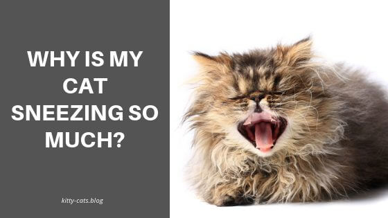 Why Is My Cat Sneezing So Much?