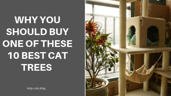 Why You Should Buy One Of These 10 Best Cat Trees in 2019
