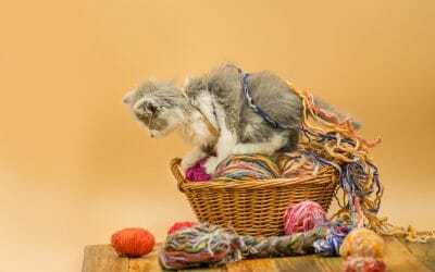 What Happened To The Cat Who Swallowed A Ball Of Yarn?