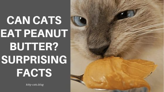 Can Cats Eat Peanut Butter Surprising facts