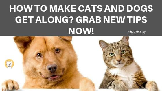 How to make cats and dogs get along Grab new tips now!