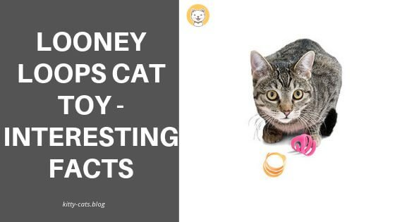 Looney loops cat toy - Interesting facts