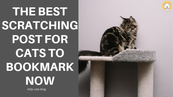 The Best Scratching Post for cats to bookmark now