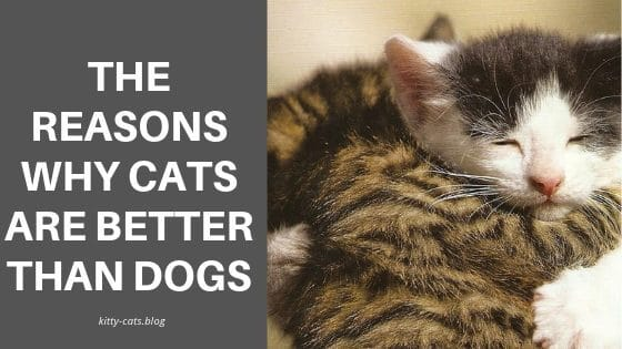 The Reasons Why Cats are Better than Dogs