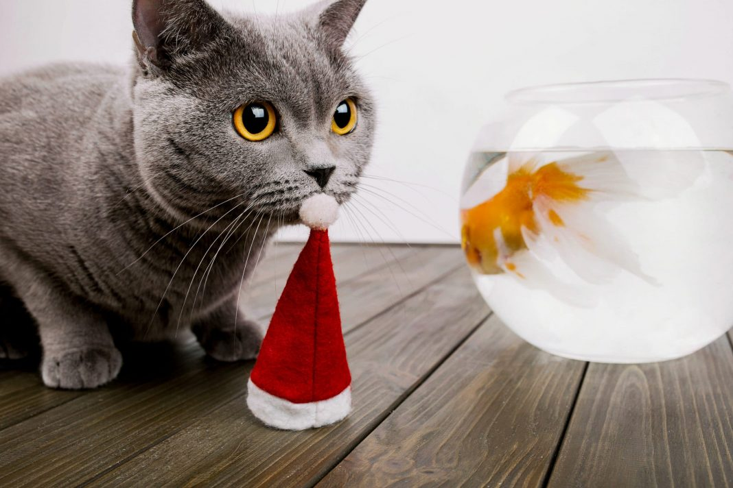 Christmas Costume For Cat