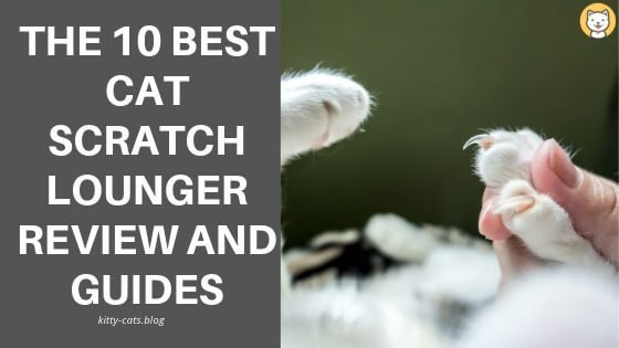 The 10 Best Cat Scratch Lounger Review And Guides