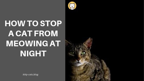 How To Stop A Cat From Meowing At Night