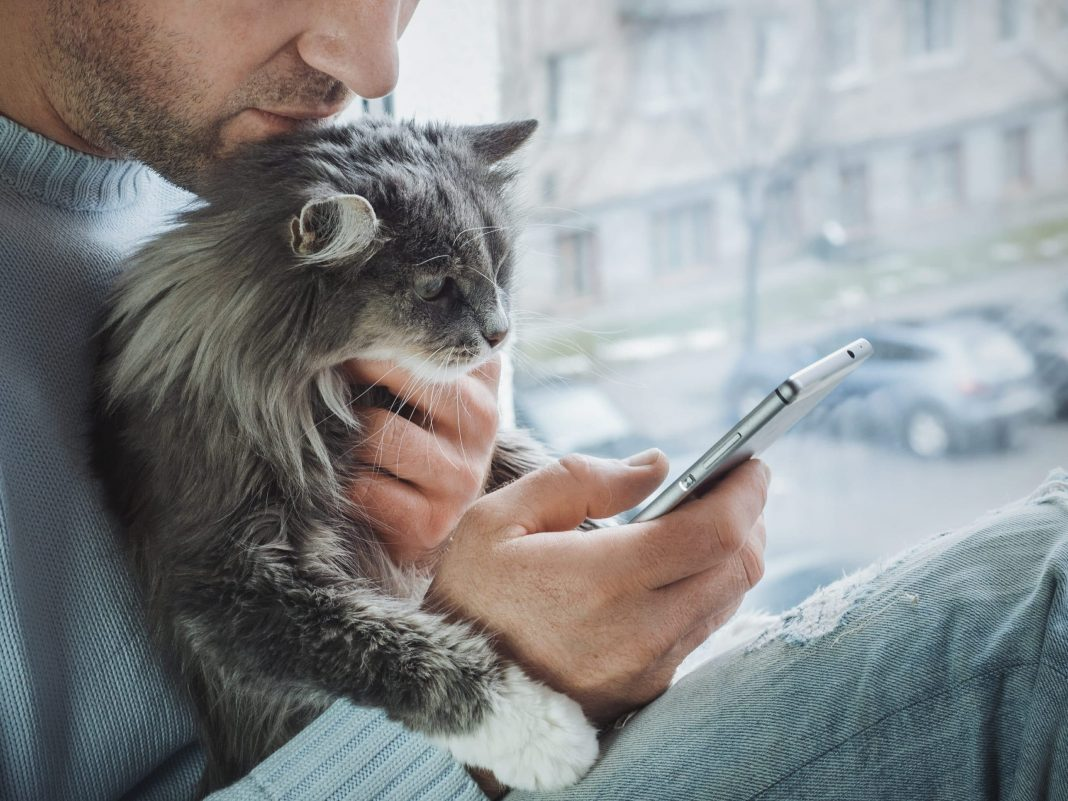 best app for cats