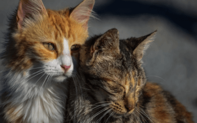 Why Do Cats Groom Each Other? Know more about your cat