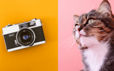 Best Pet Camera For Cats – Something Will Make You Surprised