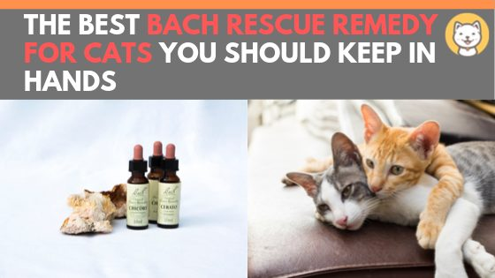 bach rescue remedy for cats