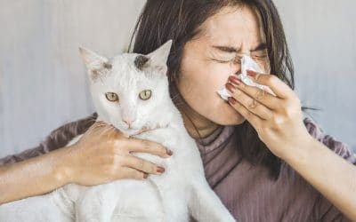 How To Know If You are Allergic To Cats?