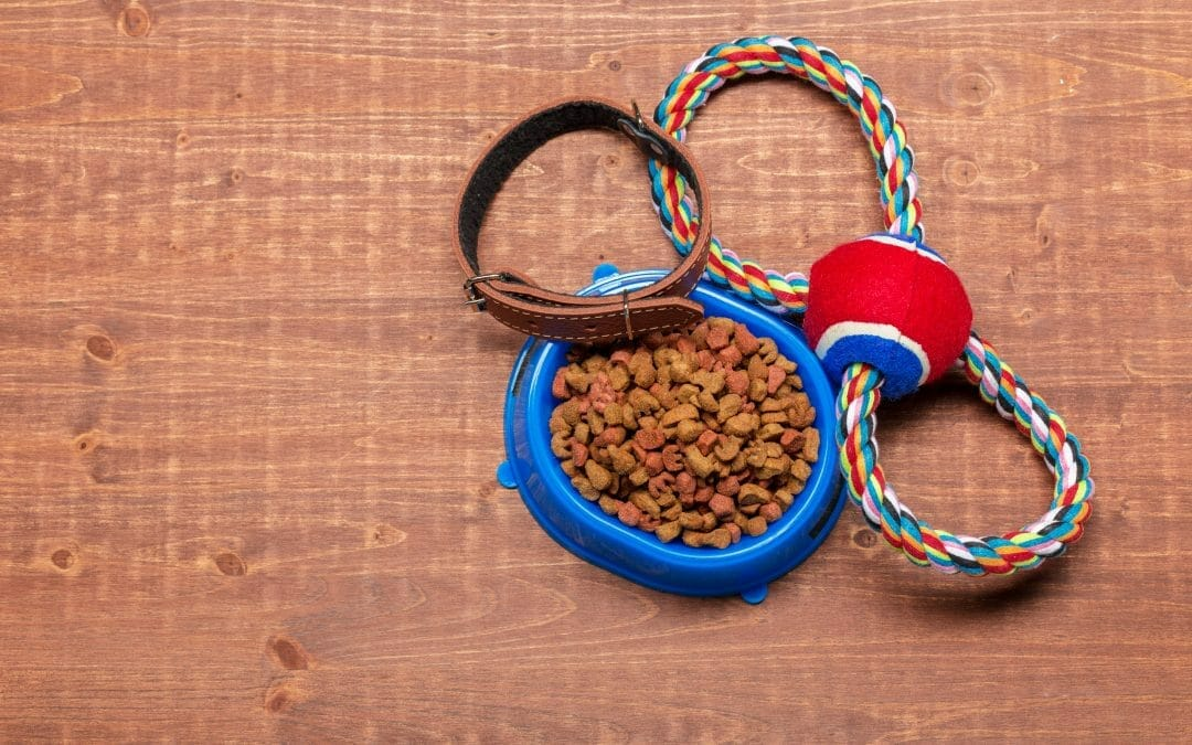 Is the grain-free good for cats? – Explore the truth