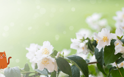 Is Jasmine Poisonous To Cats? – Does it bring any benefit for cats?