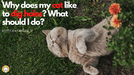 Why cat dig holes