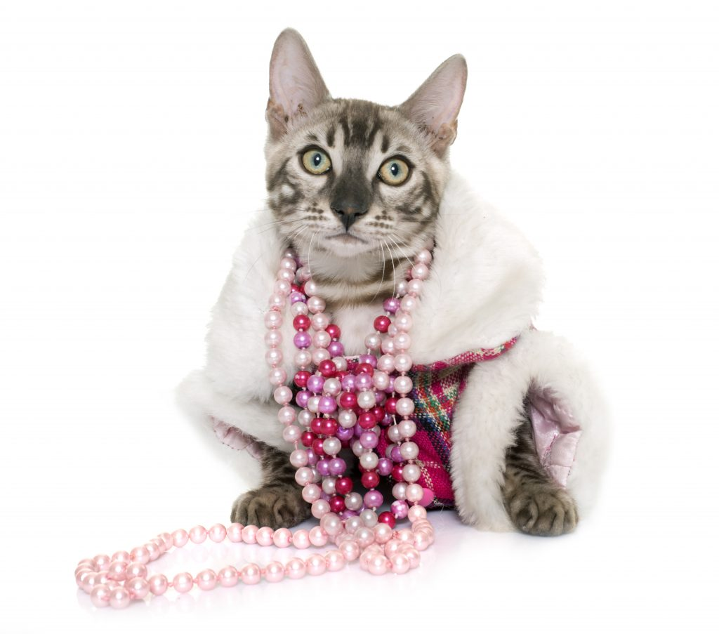 Why do cats bite jewelry