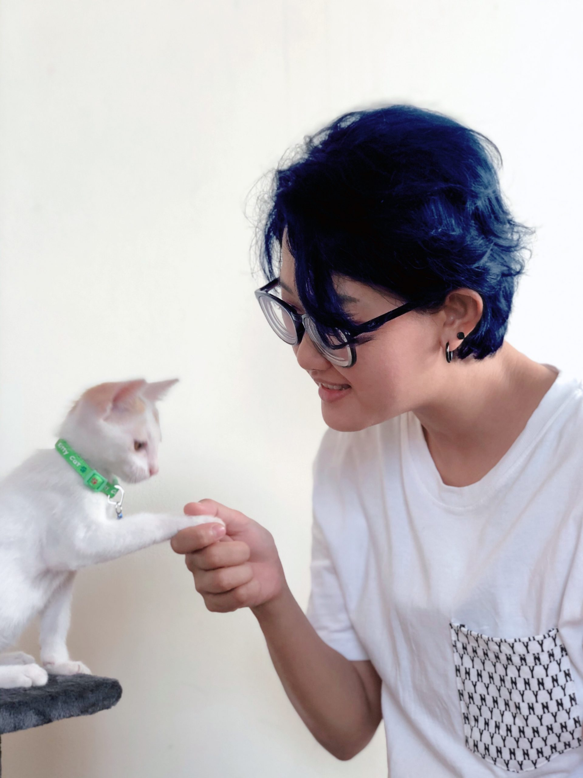 What To Expect After Deworming A Cat Updated 2020 Kitty Cats Blog